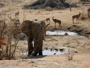 Elephant and Kudu Hoanib