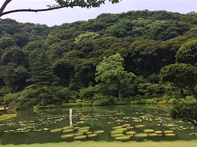 Gardens at the Beppu Hells